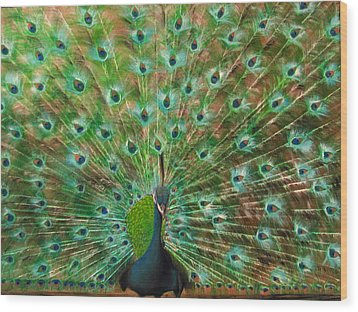 Mr. Peacock Wood Print by Sherry Robinson
