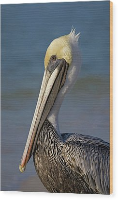 Mr Pelican Wood Print by Nick  Shirghio