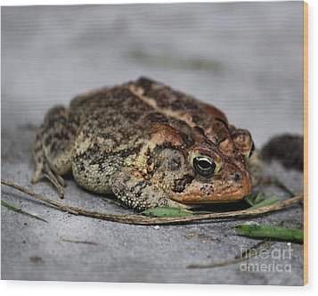 Mr Toad Wood Print by Theresa Willingham