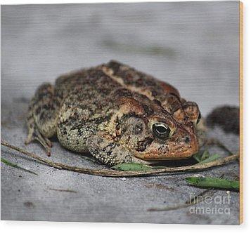 Mr Toad Wood Print