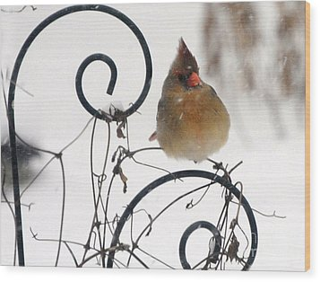 Wood Print featuring the photograph Mrs. Cardinal by Tamera James