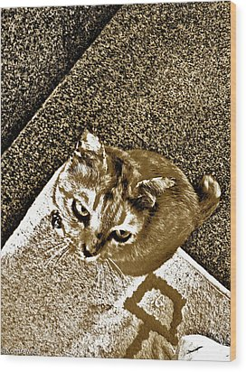 Ms Gato In Sepia Wood Print by Kornrawiee Miu Miu
