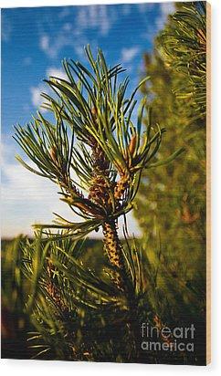 Mugo Pine Branch Wood Print by Terry Elniski