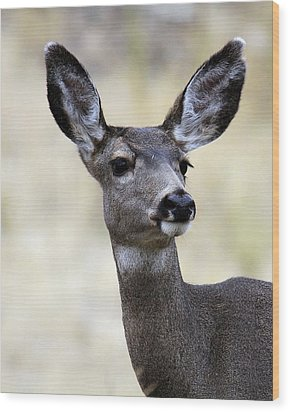 Wood Print featuring the photograph Mule Deer Doe by Steve McKinzie