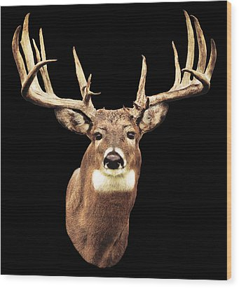 Mule Deer Head Wood Print by Walter Colvin