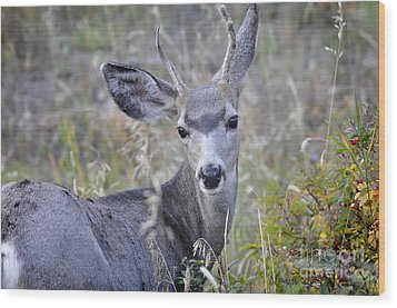 Wood Print featuring the photograph Mule Deer On Fall River by Nava Thompson