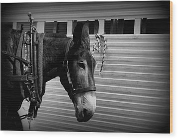 Mule - Tied Up For A While Wood Print by Travis Truelove