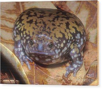 Mullers Termite Frog Wood Print by Dante Fenolio
