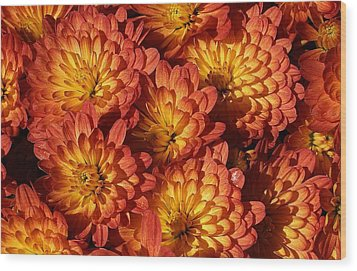 Mums Of A Different Color Wood Print by Bruce Bley