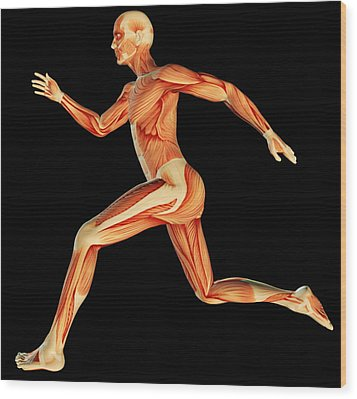 Muscular System Wood Print by Pasieka