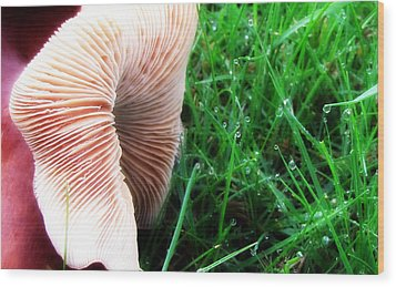 Wood Print featuring the photograph Mushroom And Dewdrops by Katie Wing Vigil