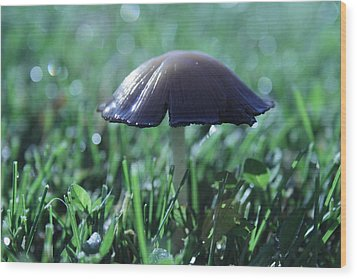 Mushroom In Morning Light Wood Print