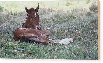 Mustang Filly Wood Print by Elizabeth Hart