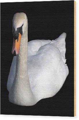 Mute Swan At Night Wood Print by Lynne Dymond