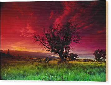 My Backyard Wood Print by Randy Sylvia
