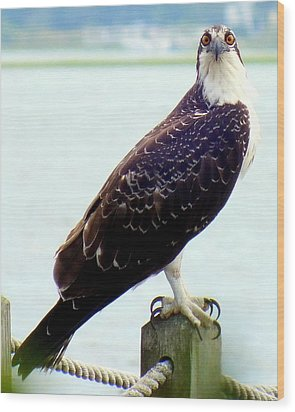 My Feathered Friend Wood Print by Karen Wiles