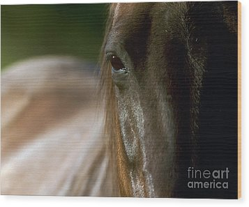 Wood Print featuring the photograph My Neigh-bor's Horse by Doug Herr