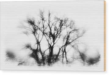 Mysterious Trees Wood Print by David Ridley