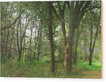 Mystic Forest Wood Print by Scott Hovind