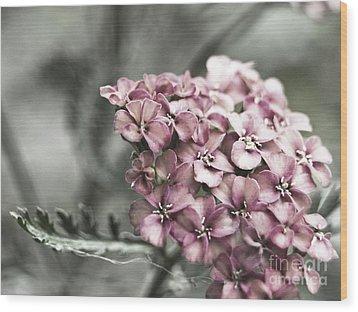 Mystic Yarrow Wood Print