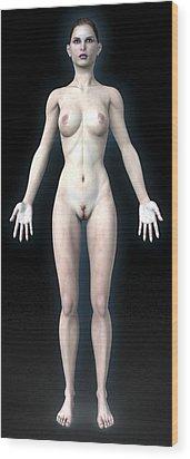 Naked Woman Wood Print by Christian Darkin