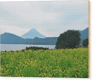 Nanohana (rape Blossoms) Wood Print by Kurosaki San