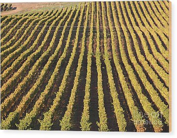 Napa Valley Vineyard . 7d9061 Wood Print by Wingsdomain Art and Photography