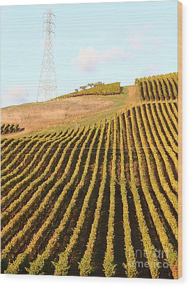 Napa Valley Vineyard . 7d9065 Wood Print by Wingsdomain Art and Photography