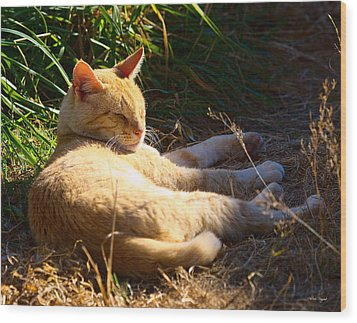 Napping Orange Cat Wood Print