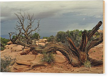 Narley Tree Wood Print by Marty Koch