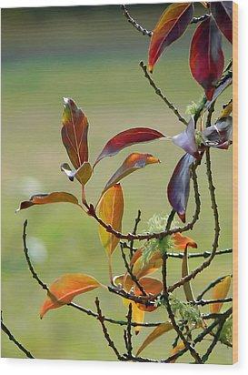 Natural Autumn Wood Print by Pamela Patch