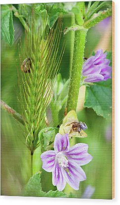 Wood Print featuring the photograph Natural Bouquet by Pedro Cardona