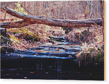 Wood Print featuring the photograph Natural Spring Beauty  by Peggy Franz