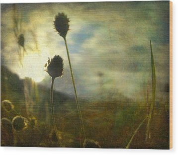 Wood Print featuring the photograph Nature #11 by Alfredo Gonzalez
