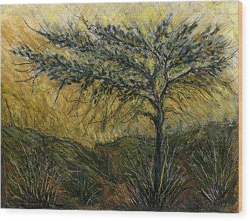Nature Landscape Green Thorns Acacia Tree Flowers Sunset In Yellow Clouds Sky  Wood Print by Rachel Hershkovitz