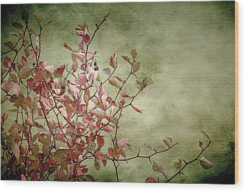 Nature On Parade Wood Print by Bonnie Bruno