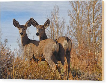 Nature's Gentle Beauties Wood Print by Lynn Bauer