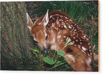 Nature's Precious Creation Wood Print by Skip Willits