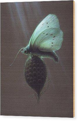 Nausithous Wood Print by Shawn Kawa