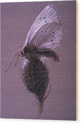 Nausithous Sketch Wood Print