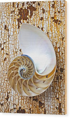 Nautilus Shell On Rusty Table Wood Print by Garry Gay