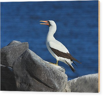 Nazca Booby Wood Print