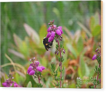 Nectar Quest Wood Print by Gayle Swigart