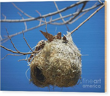 Wood Print featuring the photograph Nest For Rent by Alexandra Jordankova