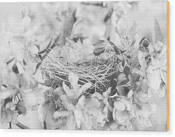 Nest In Black And White Wood Print by Stephanie Frey