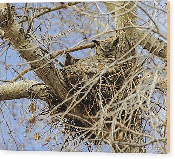 Nesting Owl  Wood Print by Stephen  Johnson