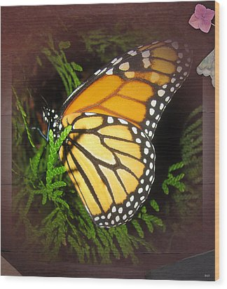 New Born Butterfly Wood Print by Debra     Vatalaro