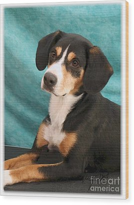 New Breed Entlebucher Pup Wood Print by Maxine Bochnia