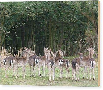 New Forest Deer Wood Print by Karen Grist