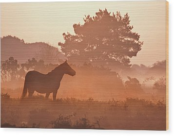 New Forest Pony In Mist At Dawn. Wood Print by Julie Mitchell/Southdowns Photographics